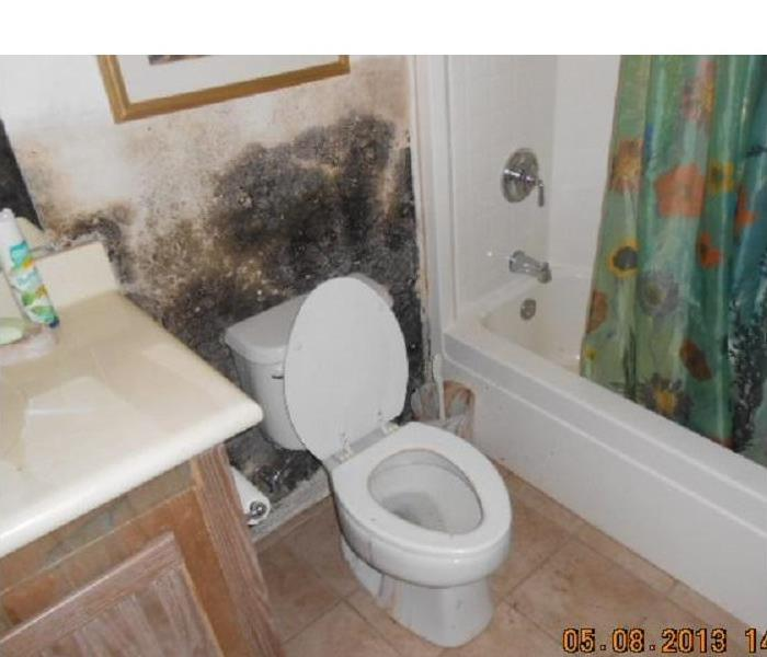 Mold Behind The Toilet