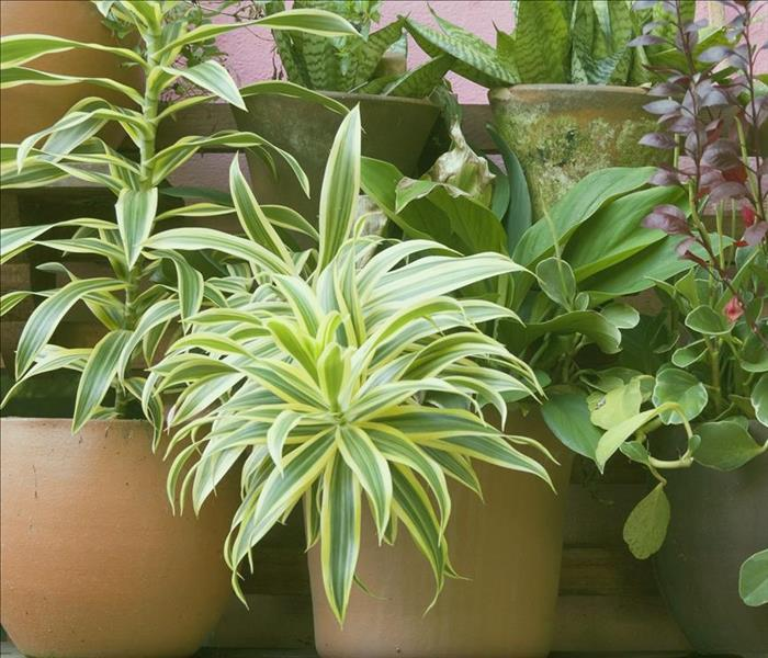 Mold Remediation What to Do if Your Plants Have Mildew
