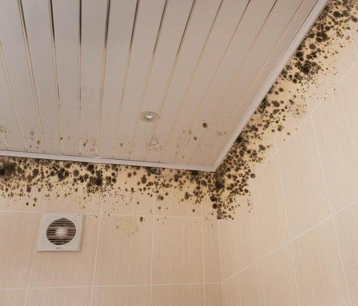 Mold Remediation 4 Reasons Mold Is Growing in Your Building