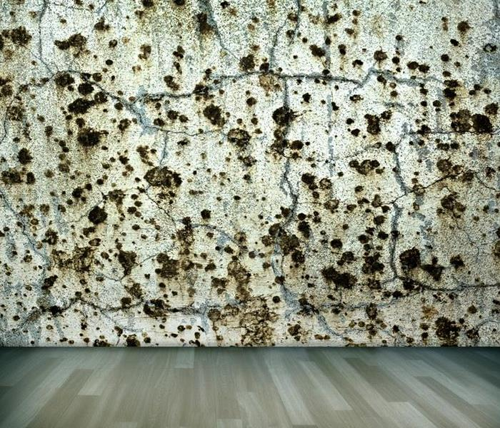 Commercial How To Find Mold in Your Building